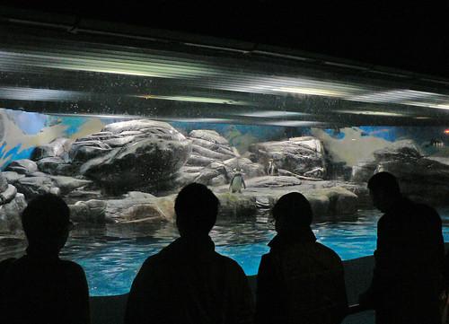 Shanghai memories 8: Aquarium