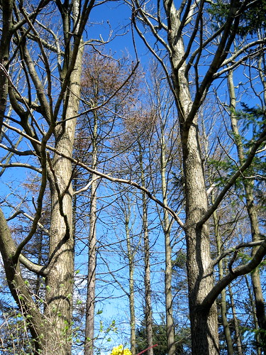 blue trees sky denmark view jylland