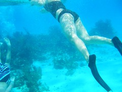 underwater diving, swimming, sports, recreation, outdoor recreation, marine biology, underwater sports, water sport, underwater, freediving,