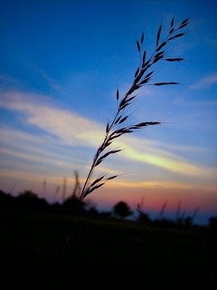 Grass on Sunset Redux