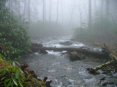 stream, woodland, fog, rainforest, rapid, river, creek, watercourse, forest, mist,