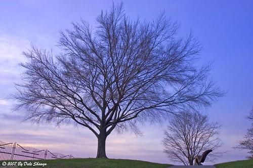 sunset sculpture tree nikon nikond100 dslr naturesfinest mywinner awesomephotography evansvilleindiana allrightsreserved© treesubject evansvillemuseum itsevansville awesometribe