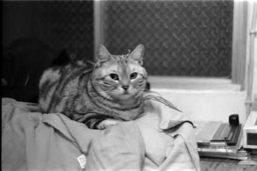 壁纸 动物 猫 猫咪 小猫 桌面 500_333