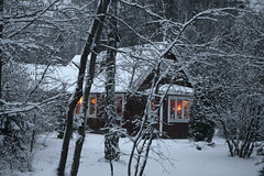 sugar house(0.0), winter(1.0), tree(1.0), snow(1.0), rain and snow mixed(1.0), winter storm(1.0), blizzard(1.0), freezing(1.0),