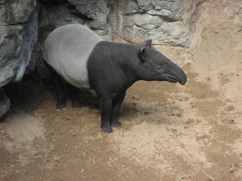 endangered species of animals