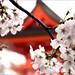 Sakura Sky: Kyoto 桜色の空: 京都 by mboogiedown