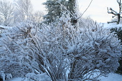 branch, winter, tree, snow, rain and snow mixed, frost, forest, winter storm, blizzard, freezing,