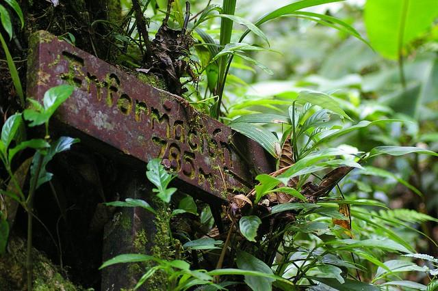 Recorriendo los senderos de la Reserva biológica Bosque Nuboso Monteverde, Costa Rica