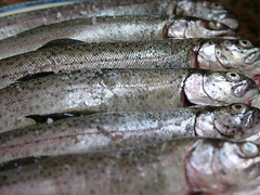 mackerel(0.0), trout(0.0), cod(0.0), pacific saury(0.0), oily fish(0.0), capelin(0.0), barramundi(0.0), shishamo(0.0), milkfish(0.0), animal(1.0), fish(1.0), fish(1.0), seafood(1.0), sauries(1.0), forage fish(1.0), food(1.0), sardine(1.0),