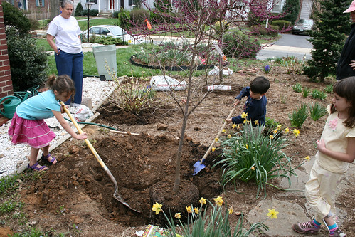 birth tree: planting a snow bell