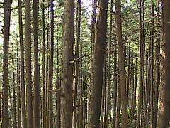 Juneau rain forest