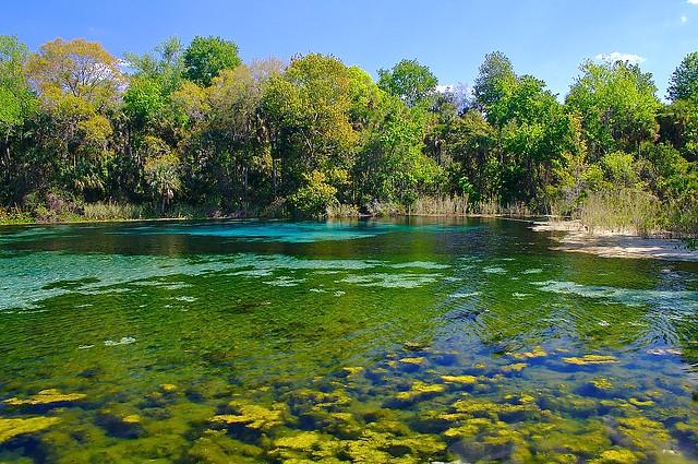 Alexander Springs Ocala National Forest Florida Flickr