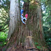 large tree north fork nooksack river mt baker snoqualmie nf whatcom co wa manuel beers marion smith sharon jones 4