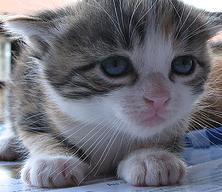 minicat