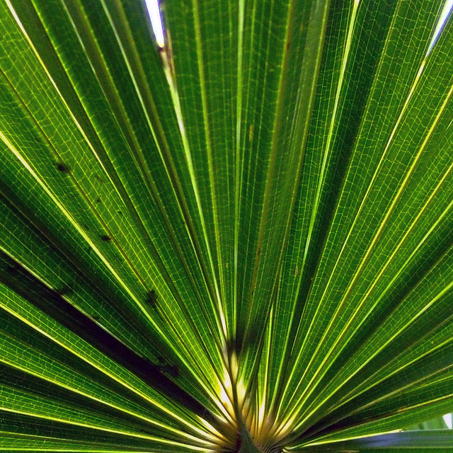 how to cut palm fronds