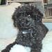 021222 zorro on fleece by xjyxjy