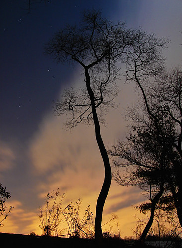 longexposure nightphotography blue winter sunset shadow sky plant color colour tree beautiful silhouette yellow backlight night clouds catchycolors stars gold treesilhouette evening md flora backyard colorful exposure pretty branch nocturnal bright cloudy dusk vibrant branches horizon suburbia vivid maryland columbia calm shutter stunning suburbs nightsky backlit colourful deciduous silhouetted radiant plantlife afterdark backlighting cloudysky nightfall prettysky shutterspeed lightpollution settingsun lowshutterspeed branching aftersunset prettycolors prettycolours silhouettetree phelpsluck