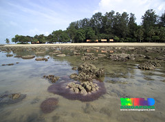 Living lagoon, Sisters Islands, Singapore