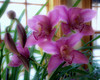 Orchids Ortonized