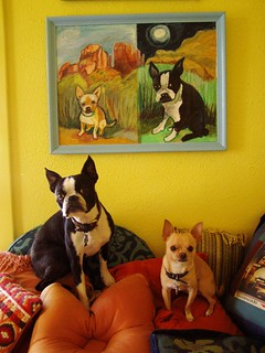 dogs and their portrait2
