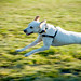 Small photo of Sela running