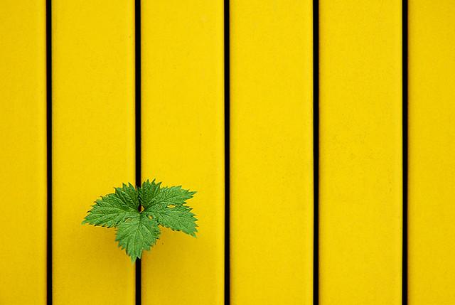 low, yellow, Green, yellow, yellow, yellow, yel...