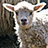 the Little Lambs group icon