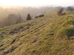 prairie, land lot, steppe, field, mountain, grass, tree, mound, shrubland, hill, highland, natural environment, fell, meadow, wilderness, pasture, vegetation, rural area, grassland, mountainous landforms,