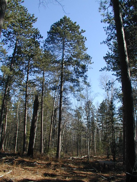 Cloquet Mn Home For Sale Natural Woodwork