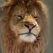 Lionhead by K. Linehan