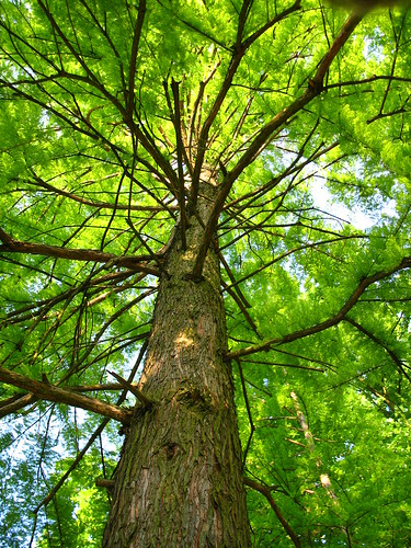 park tree green catchycolors zagreb maksimir drvo cmwdgreen