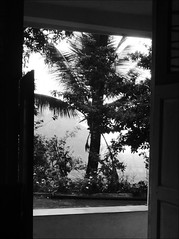 Vie from the door