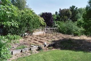 2007 Garden 015