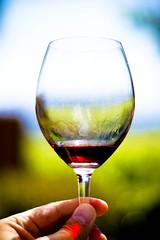 alcohol, wine glass, yellow, wine, drinkware, stemware, distilled beverage, liqueur, glass, green, red wine, reflection, close-up, drink, alcoholic beverage,