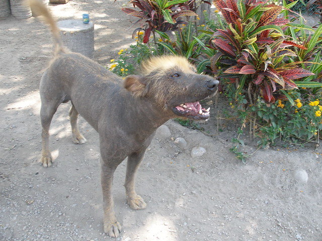 Image Result For A Dog That