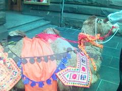 Camel - prop