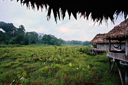 travel blue sky green nature water clouds forest canon landscape eos ecuador amazon rainforest lagoon jungle 5d davele 1635mmf28l kapawi