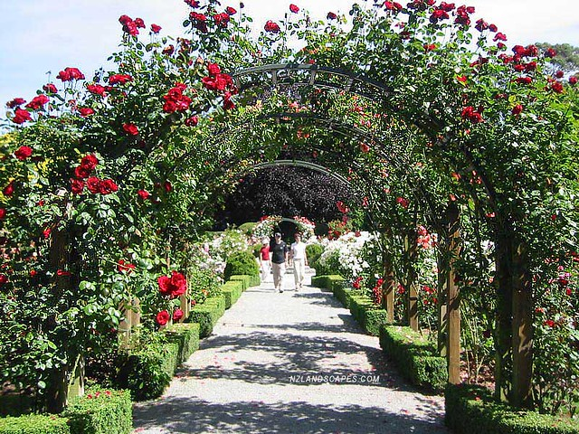 Rose arbor landscaping ideas new zealand nz landscapers for Garden landscape ideas nz