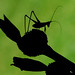 Antenna Man Profile by Jeff Clow