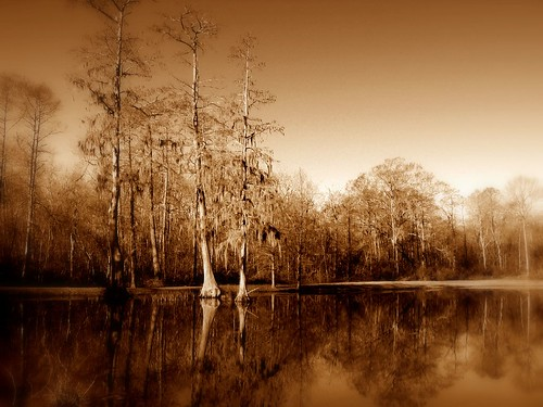 trees reflection tree art nature wet sepia landscape interestingness pond beige louisiana picasa 100v10f explore batonrouge swamp urbannature mostinteresting cypresstrees mrgreenjeans gaylon gaylonkeeling