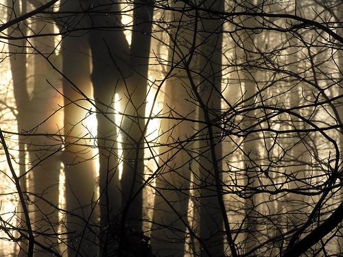 morning trees sun fog listeningto nj warren cranberrieseverybodyelseisdoingit pahinuibrothersselftitled