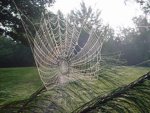 Article Directory - Spiders Web
