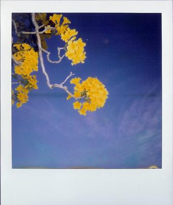 polaroid 104.