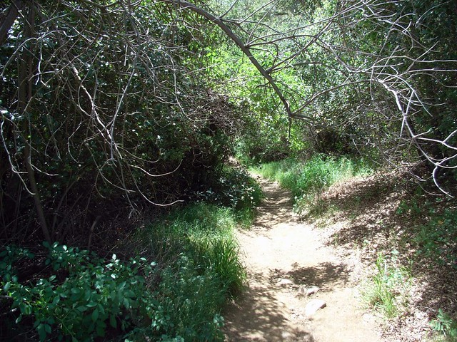 Grotto Trail Begins
