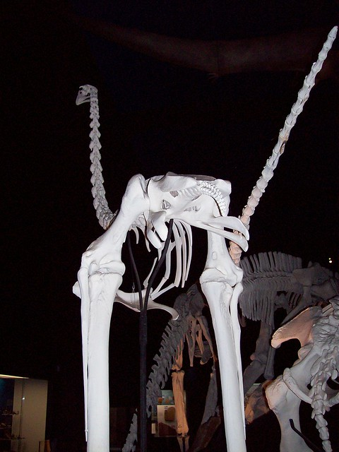Skeletal Dinosaur Porn
