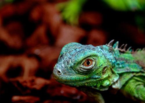 Green pet monster - IMG_0170 ed+cr