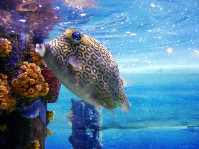 Zoo De Omaha Aquarium Arrecife De Coral 3 Flickr