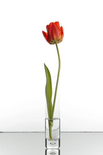 Tulip Vase by M J M