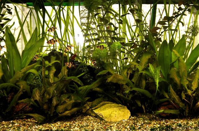 rośliny in vitro