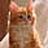 the Cat Breed Pictures group icon